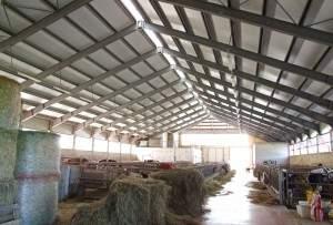 Capannoni prefabbricati per bovini da latte