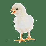 Capannoni prefabbricati ad uso avicolo