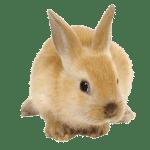 Capannoni prefabbricati ad uso cunicolo, Rabbit Sheds