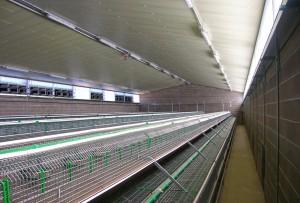 Capannoni prefabbricati per allevamento conigli