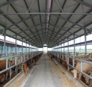 Capannoni-prefabbricati-per-bovini-da-carne-1