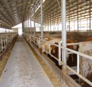 Capannoni-prefabbricati-per-bovini-da-carne-11