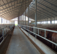 Capannoni-prefabbricati-per-bovini-da-carne-14