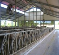 Capannoni-prefabbricati-per-bovini-da-latte-1