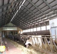 Capannoni-prefabbricati-per-bovini-da-latte-4