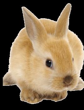 Rabbits Sheds